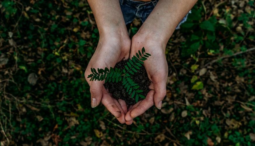 Voir le monde en vert avec PROXIMEO 🌳 9